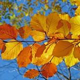 ilustrační obrázek k článku Provoněný podzim