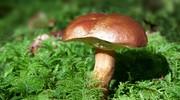 ilustrační obrázek k článku Bramborové placky s houbami
