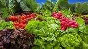 ilustrační obrázek k článku Letní zeleninový salát